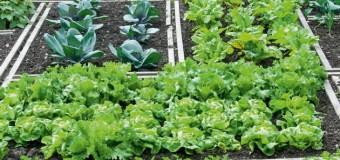 Ο δημοτικός λαχανόκηπος λειτουργεί οργανωμένα