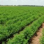 «Μπλόκο» στις επιδοτήσεις χιλιάδων αγροτών