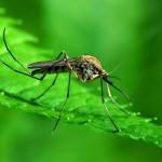«Κουνούπια – Δημόσια Υγεία – Ατομικά μέτρα προστασίας»