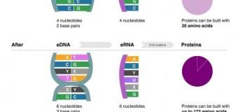 Επιστήμονες δημιούργησαν την πρώτη μορφή ζωής με τεχνητό DNA!