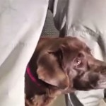 H συγκινητική σκηνή που βλέπει τον σκύλο του μετά από 5 χρόνια (Βίντεο)