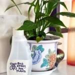 Κρατήστε τα ζωύφια μακριά από τα φυτά σας!