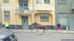 18614738__75420209_reindeer1.limghandler