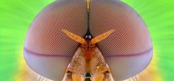 Έντομα σε… κοντινά πλάνα!