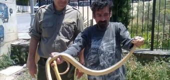 Θεσσαλονίκη: Φίδι δύο μέτρων εντοπίστηκε κοντά σε σχολείο