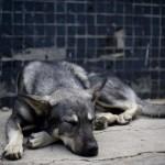 Πρόστιμο 30.000 ευρώ για βασανισμό σκύλου μέχρι θανάτου στις Σέρρες