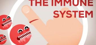 Πως λειτουργεί το ανοσοποιητικό σύστημα μέσα από ένα εξαιρετικό animation video
